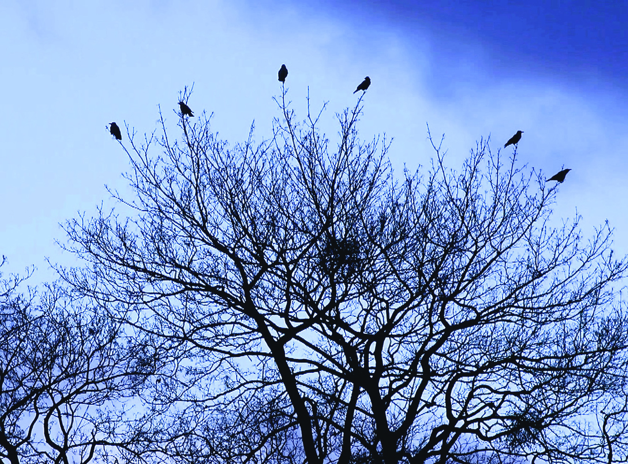 TIME OF CROWS